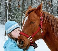 Christma horse WIDE OPEN PETS