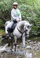 competitive trail riding 3