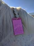 contact info in horse's mane pro equine groom