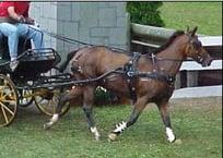 driving bundle CarriageDriving.net