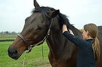 equine massage EQUINE JOURNAL