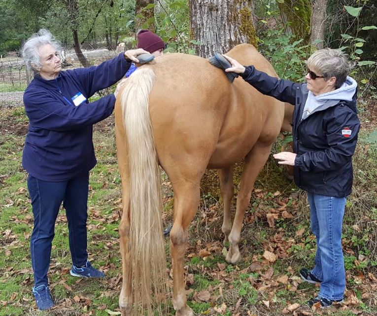 Experiential horse learning 1