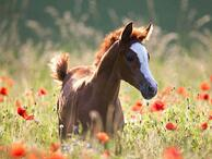 foal in flowers SunshineRidingSchool