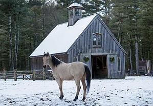 horse-and-barn-in-snow_stablemanagement