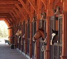 horse and stalls 1