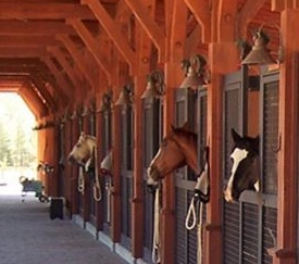 horse-and-stalls-1-e1519363273166