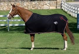 horse-blanket-3