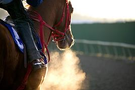 horse breathing equestrian profesdsional