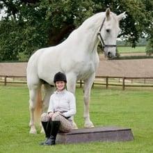 horse clicker trianing