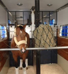 horse in commercial hauler