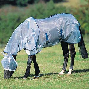 horse in fly sheet and mask