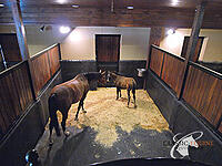 horse stall with mats