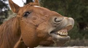 horse teeth slohorsenews.net