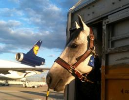 horse watching plane