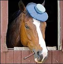 horse-with-headache
