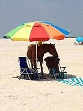 horse with sun umbrella