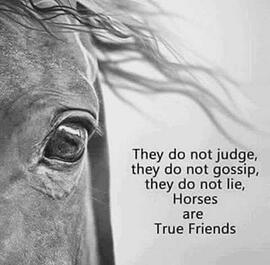 horses are rue friends