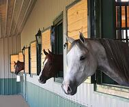 horses looking out window