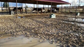 mudd and manure HorsesForCleanWater