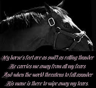 my horses feet