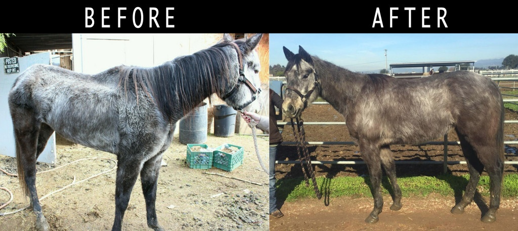 rescue before and after Tails OfA Shelter Vet