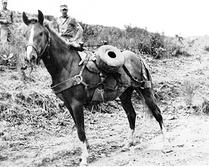 sgt-reckless-live