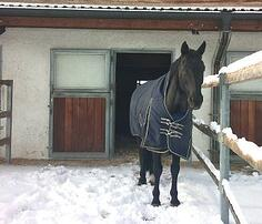 snow stabled horse S H DRESSAGE