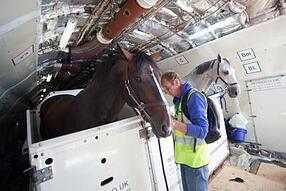 traveling with horse