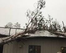 wick buildings tree in barn