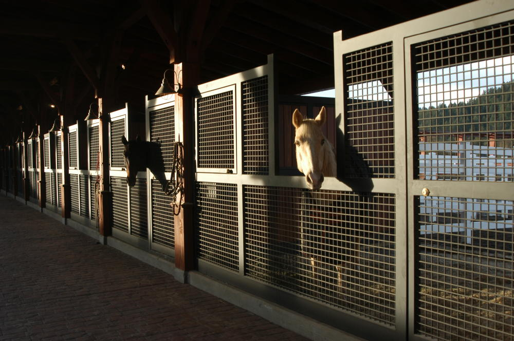 Stall Fronts in morning light with Sundance.180109040308