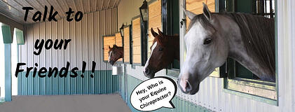 Who is your Equine Chiropractor_