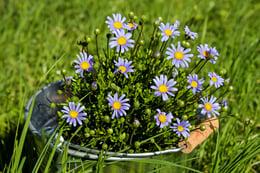 daisies-2209084_1280