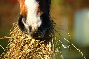 horse and hay