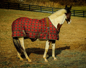 horse blanket-1