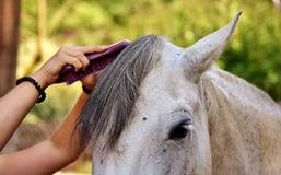 horse brush - Classic Equine Equipment