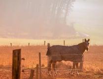 Horse Stalls - Classic Equine Equipment
