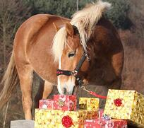 horse with presents Photo Credit -EventingConnect 12-20-18