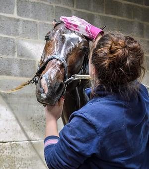 horse-2182599_960_720