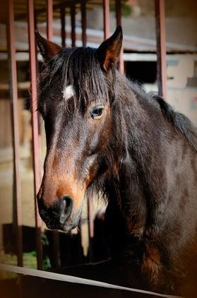 horse Classic Equine Blog
