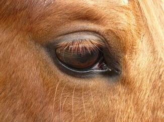 Classic equine Horse Blog