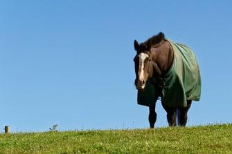 Horse Blog - Classic Equine