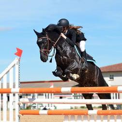 Classic Equine Equipment