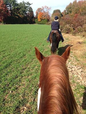 horses-trail ride- Cee Blog