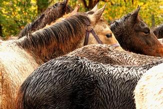 Wet Horses- CEE Blog