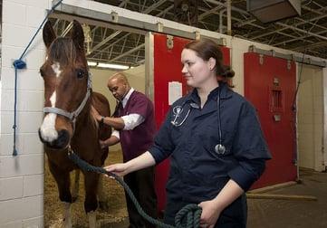 veterinarians-1