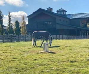 Classic Equine Blog