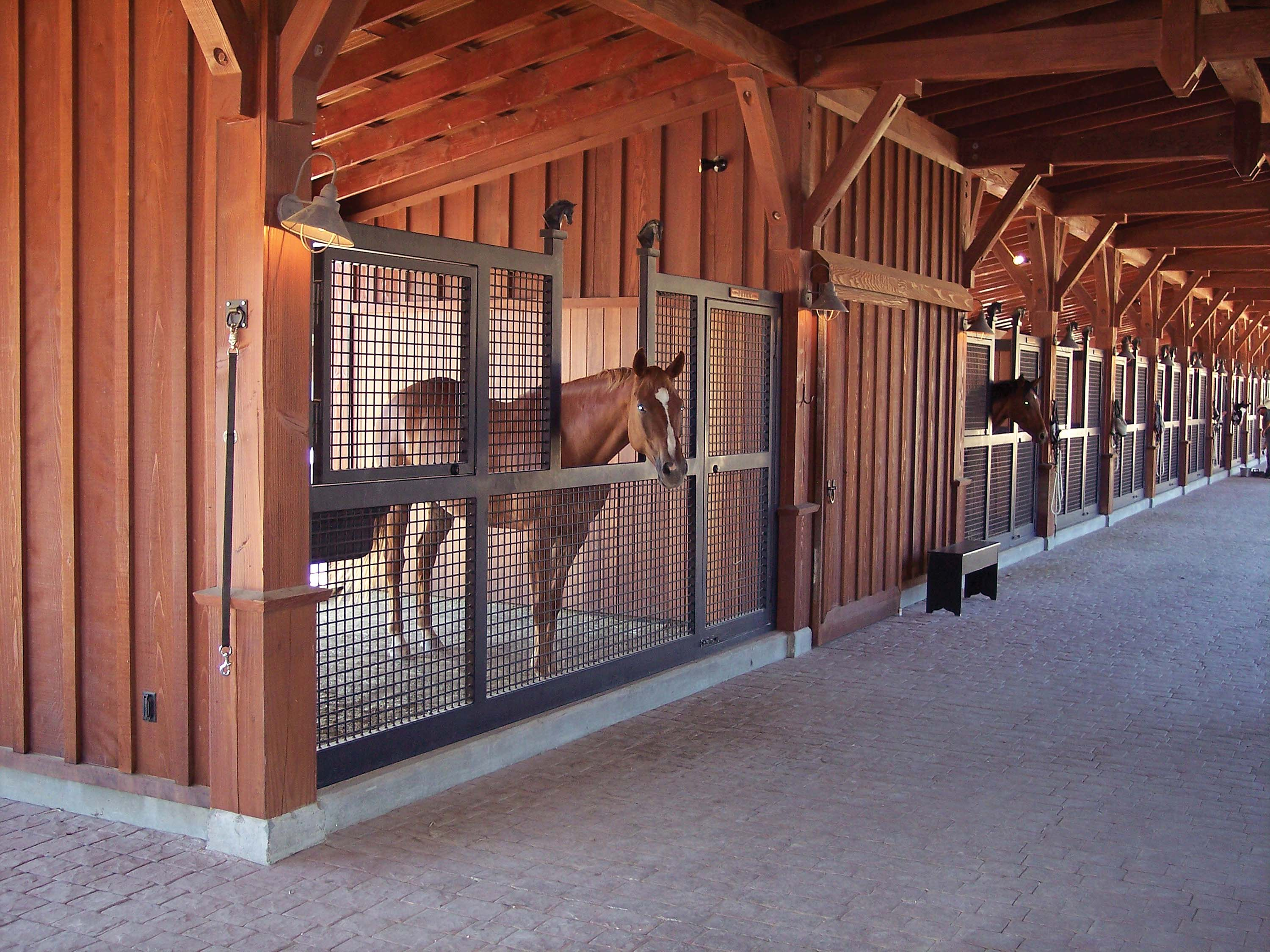 Barn Building For Special Needs Horses Layup And Rehab