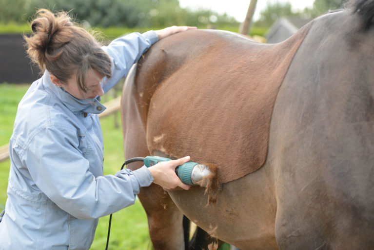 clipping horse