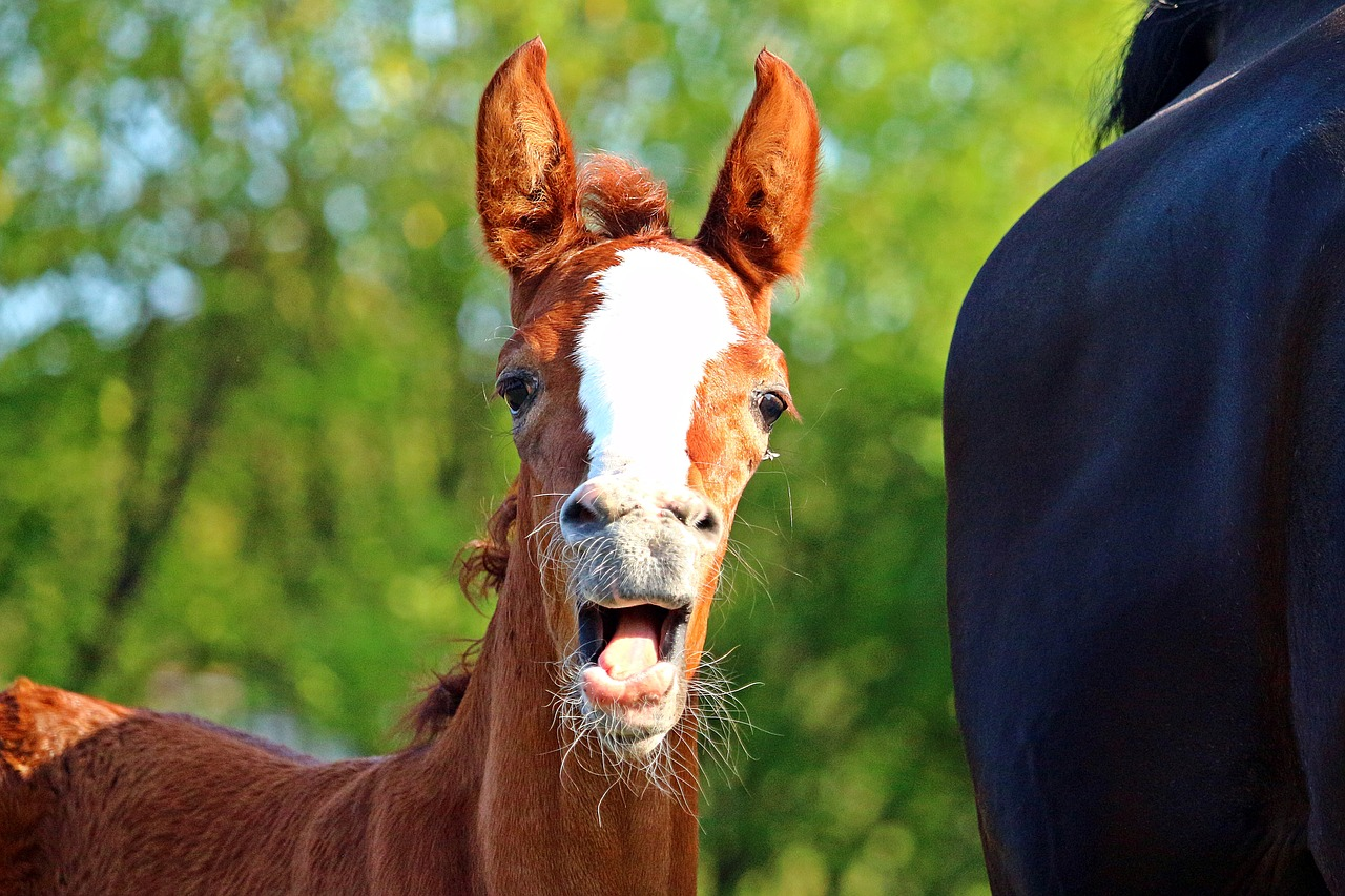 foaling season oh my