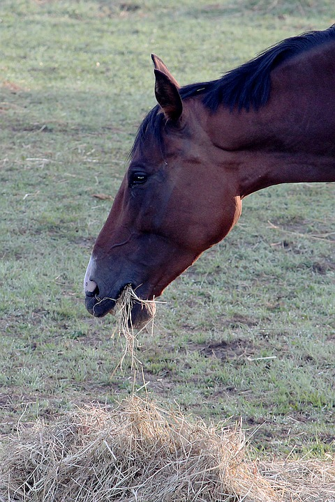 horse and hay-1